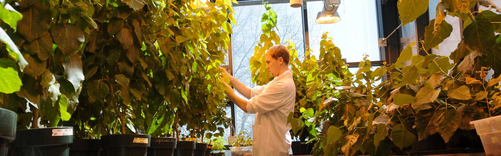Student tending to rows of plants