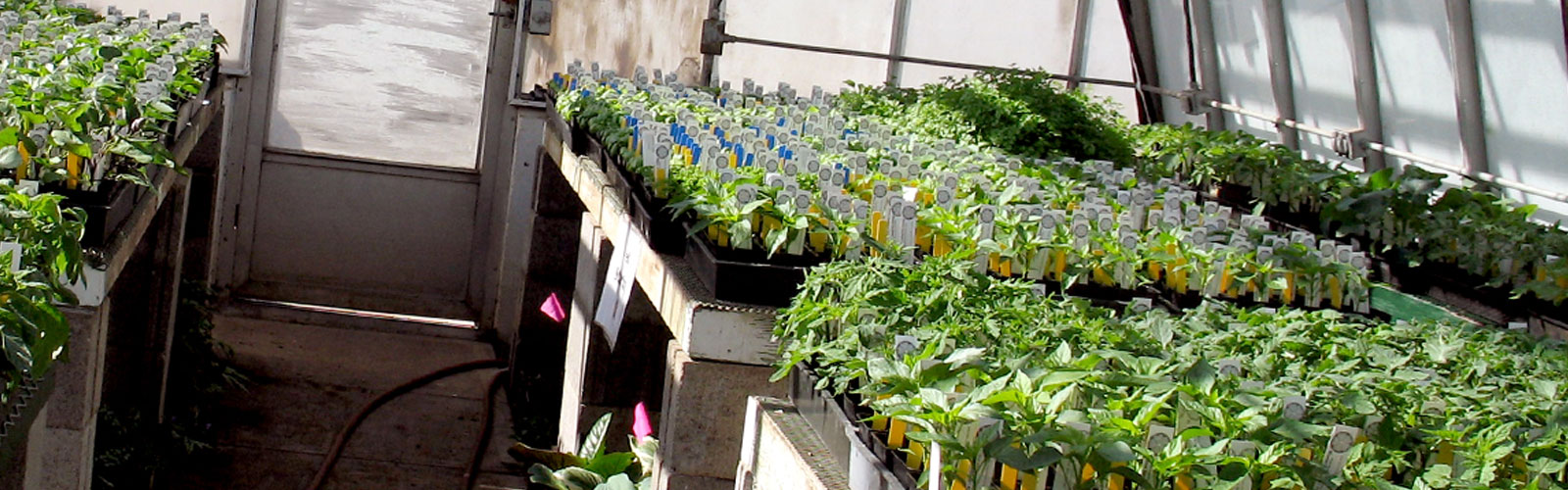 row of planter boxes in greenhouse